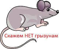 Серое братство. Чем опасны крысы и мыши и как от них избавиться