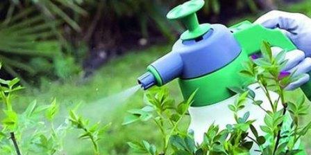 Эффективное и безопасное применение пестицидов на придомовых участках