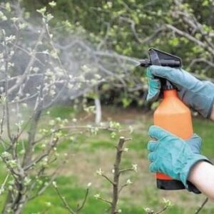 Пестициды. Влияние на здоровье человека.